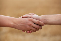 Two men, farmers shake his hand royalty free stock photography