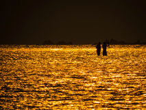Two men in golden sea at sunset Royalty Free Stock Photography
