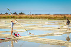 Two men harvest salt in the traditional way in the salt marshes Stock Images
