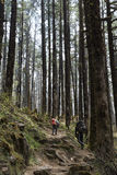Two men hiking in mountain ancient forest Stock Photo