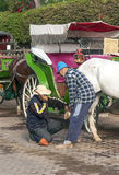 Two men put horseshoes Stock Image