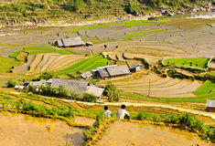 Two men at rice terraced fields Stock Photography