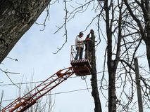 Two men sawing a tall tree with a chainsaw, standing on an aerial platform. Bare tree branches on a blue sky background,. Electricity cables and two workers on stock images