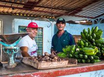 Two men selling manioc and bananas in cuba. Two men standing in their stall selling manioc and cavendish banana on a market in camaguey, cuba Royalty Free Stock Photo