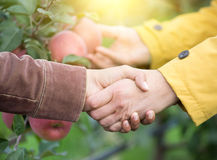 Two men shaking hands in orchard Royalty Free Stock Image