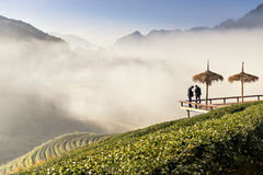 Two men at tea plantation. Tea plantation is located at Angkhang Mountain chiangmai northern of thailand Stock Images