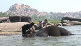 Two men washing elephant in the river. HAMPI, INDIA - 28 JANUARY 2015: Two men washing temple elephant Lakshmi in the river stock footage