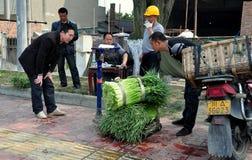 Pengzhou, China: Farmers Weighing Green Garlic Stock Photos
