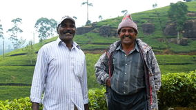 Two men in working clothes standing in tea plantation in Nuwara Eliya. Nuwara Eliya, Sri Lanka - 13 February 2016 : two men in working clothes standing in tea stock video
