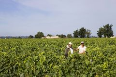 Vineyard fields. Two men working in the vines of Saint Emilion fields, in Saint Emilion, France royalty free stock photography