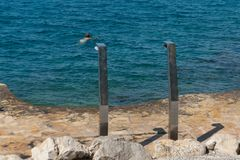 Two metal showers on the beach coast of the Adriatic sea. Eco-friendly beaches marked with a blue flag.  royalty free stock image