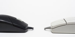Two Mice. Computer mouse device Stock Photo
