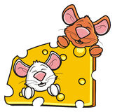 Two mice snout peeking out of a piece of cheese Stock Photography