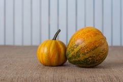 Two mini autumn orange pumpkin on sacking table Royalty Free Stock Photos