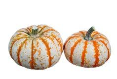 Two mini pumpkins royalty free stock photo