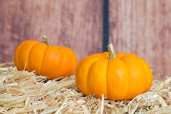 Two Mini Pumpkins Royalty Free Stock Photos