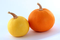 Two mini pumpkins on a white background Royalty Free Stock Image