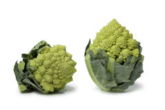 Two mini Romanesco cabbages Royalty Free Stock Images