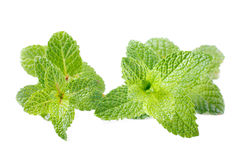 Two mint stem Royalty Free Stock Photography
