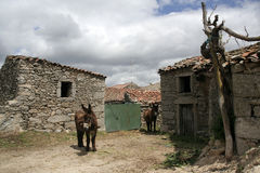 Two Miranda donkeys Royalty Free Stock Photo