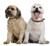 Two mixed-breeds, 4 and 16 years old Stock Images