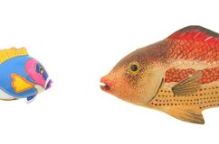 Two model fish Royalty Free Stock Images