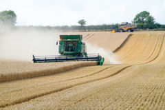 Two modern combine harvester cutting crops corn wheat barley working golden field Royalty Free Stock Image
