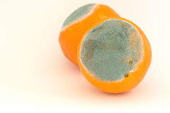 Two moldy oranges Royalty Free Stock Photography