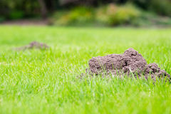 Two mole Hills Royalty Free Stock Image