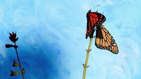 Two Monarch Butterflies on same flower stem flapping wings slight breeze blue background