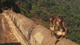 Two monkey`s relaxing on a barricade in India. Two monkey`s are seen against a backdrop in India resting on a barricade in this wide shot stock video footage
