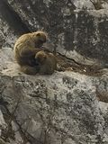 two monkey are sitting on a rock stock photo