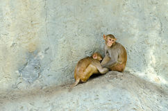 Two monkey sitting Stock Photo