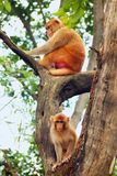Two Monkey Sitting On A Tree Stock Photography