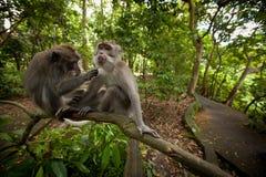 Two monkeys Stock Image
