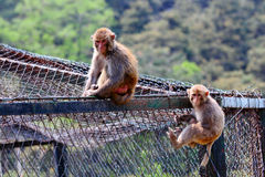 Two Monkeys Stock Photography
