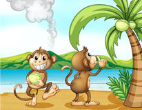 Two monkeys at the beach Stock Image