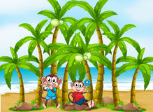 Two monkeys at the beach near the coconut trees Royalty Free Stock Photo