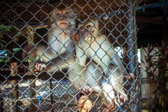 Two monkeys in cage of zoo Stock Photos