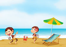 Two monkeys dancing with a little crab at the beach Royalty Free Stock Image