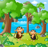 Two monkeys in the forest stock illustration