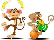 Two monkeys. Funny monkey juggling two yellow bananas Stock Photography
