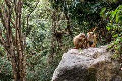 Two monkeys of the Jungle. Royalty Free Stock Photos