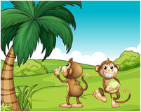 Two monkeys near the coconut tree Stock Photo