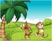 Two Monkeys Near The Coconut Tree Stock Photo