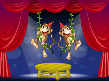 Two monkeys performing at the  stage Royalty Free Stock Photography