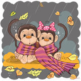 Two Monkeys in a scarf Stock Photo