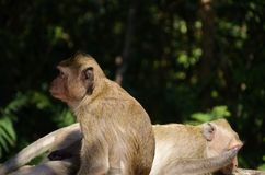 Two monkeys, two characters in a forest. stock images