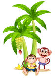 Two monkeys under the banana plants Royalty Free Stock Image