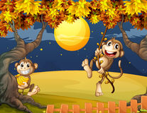 Two monkeys wondering in the middle of the night Stock Photo